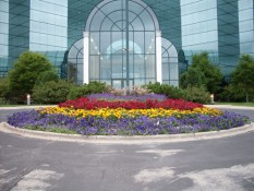 Flowers In Front Of Commercial Building